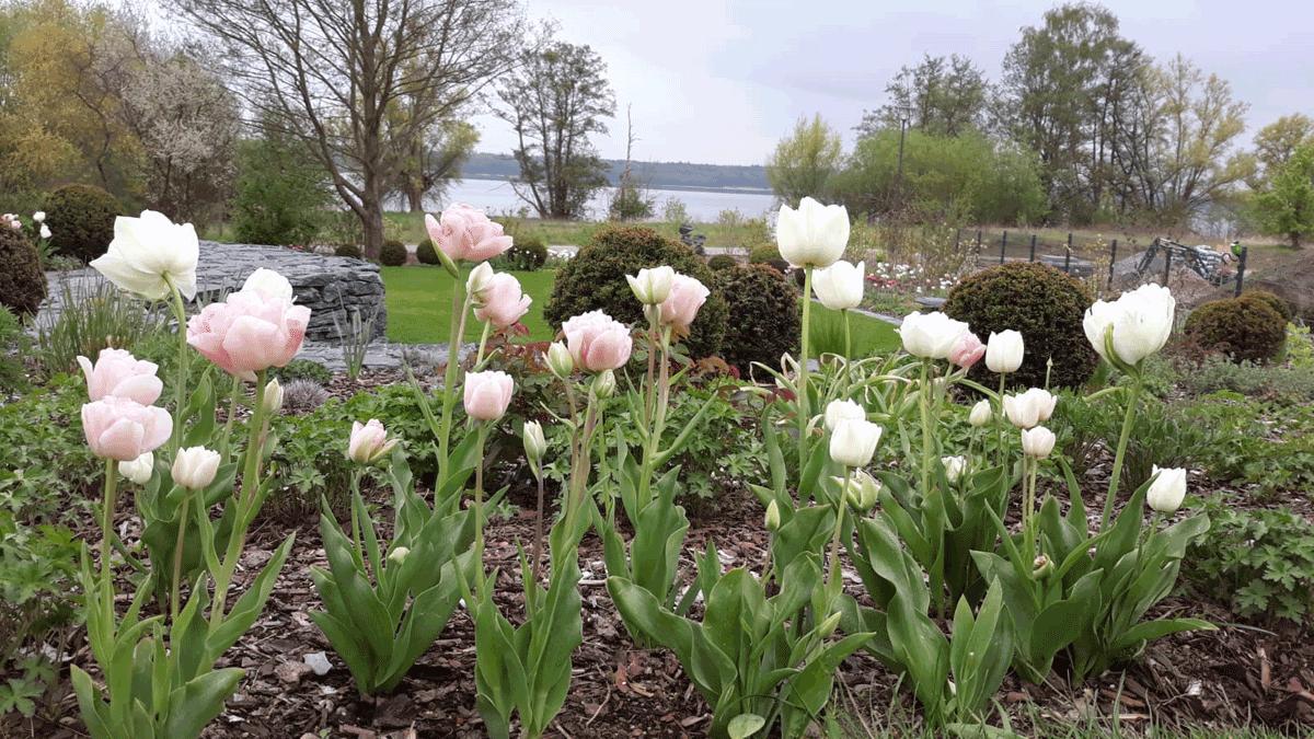 1_Garten-bapflanzung
