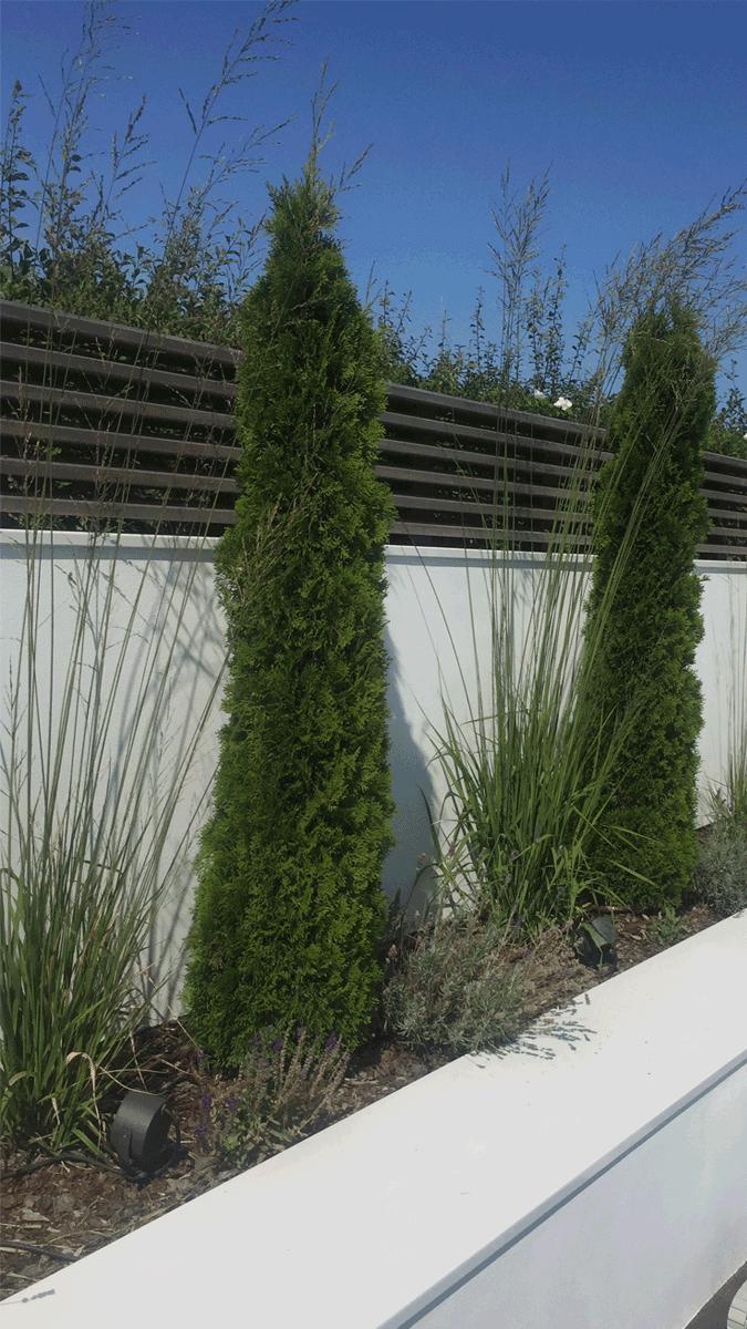 1_Gartenpflanzen