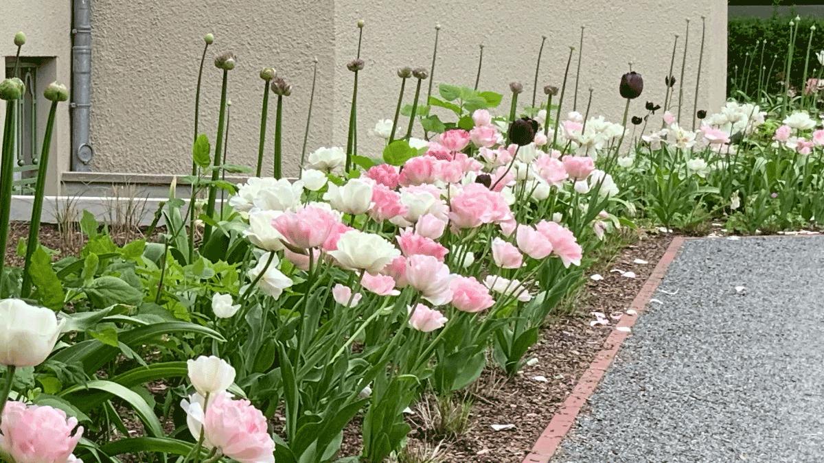 Blumenschoenheit