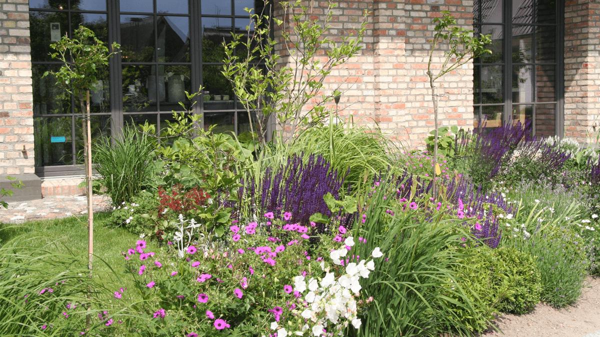 Pflanzung-am-Haus
