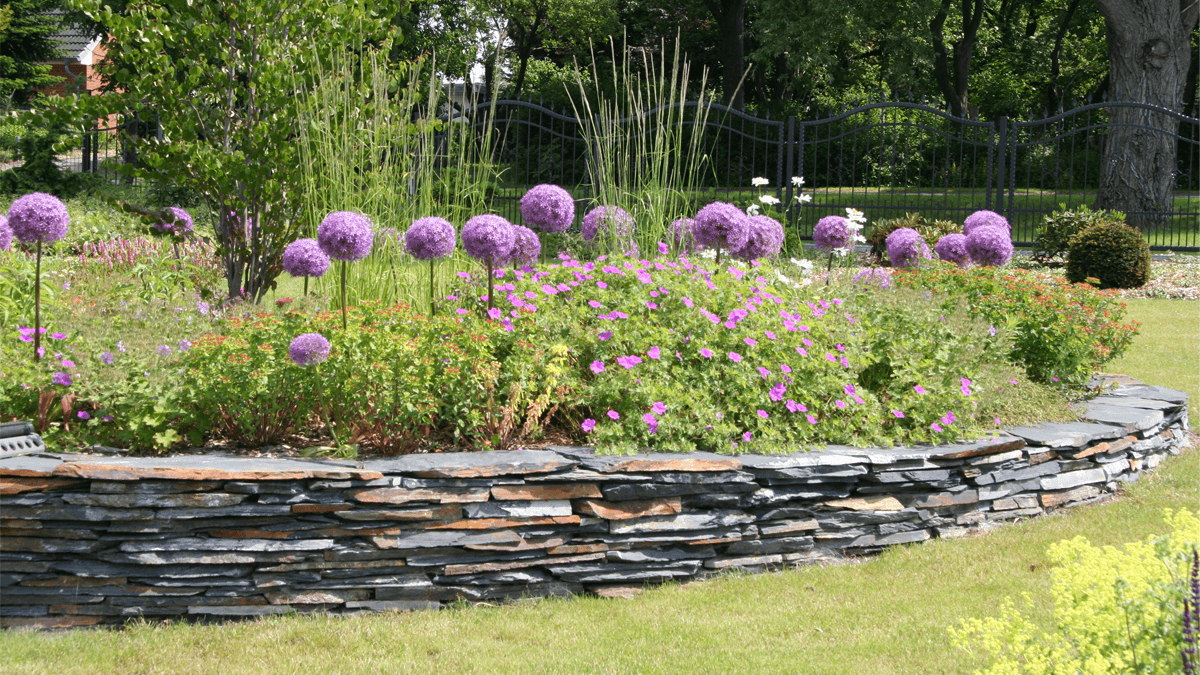 lila-blumen