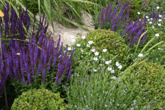 Pflanzung-zwischen-Buchskugeln